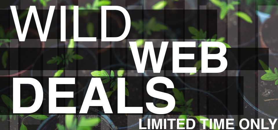 Wild Web Deals